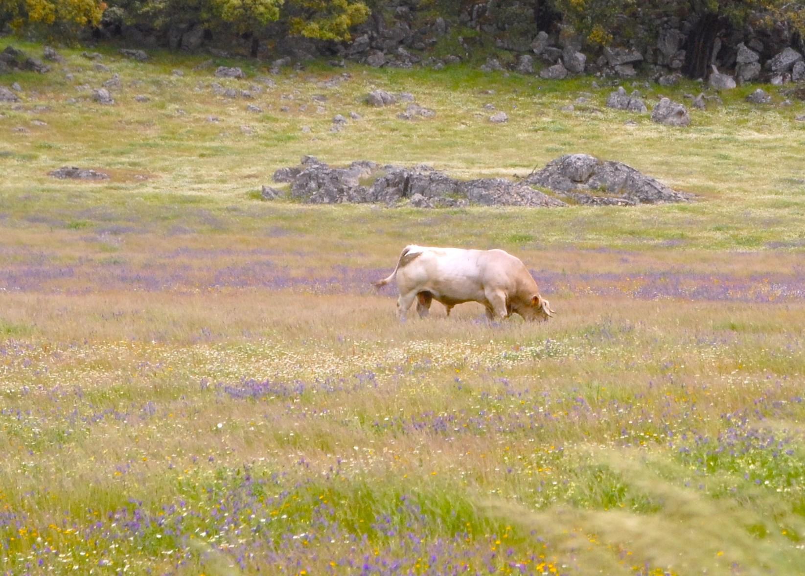 visita a la ganadería el capriolo