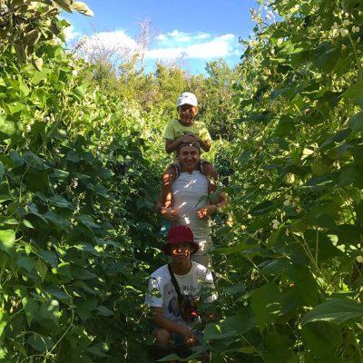 Actividades-Agricultura-Ecológica-El-Capriolo