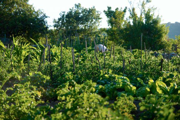 agricultura ecológica el capriolo agroturismo