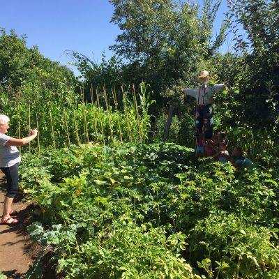 Agricultura-ecologica-el-capriolo8