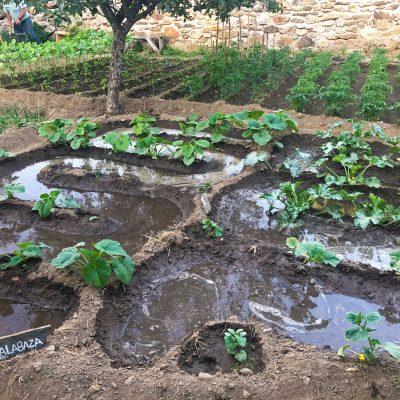 Agricultura-ecologica-el-capriolo9