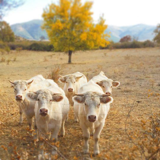 No busques más un hotel con granja, descubre el Agroturismo en la Sierra de Madrid