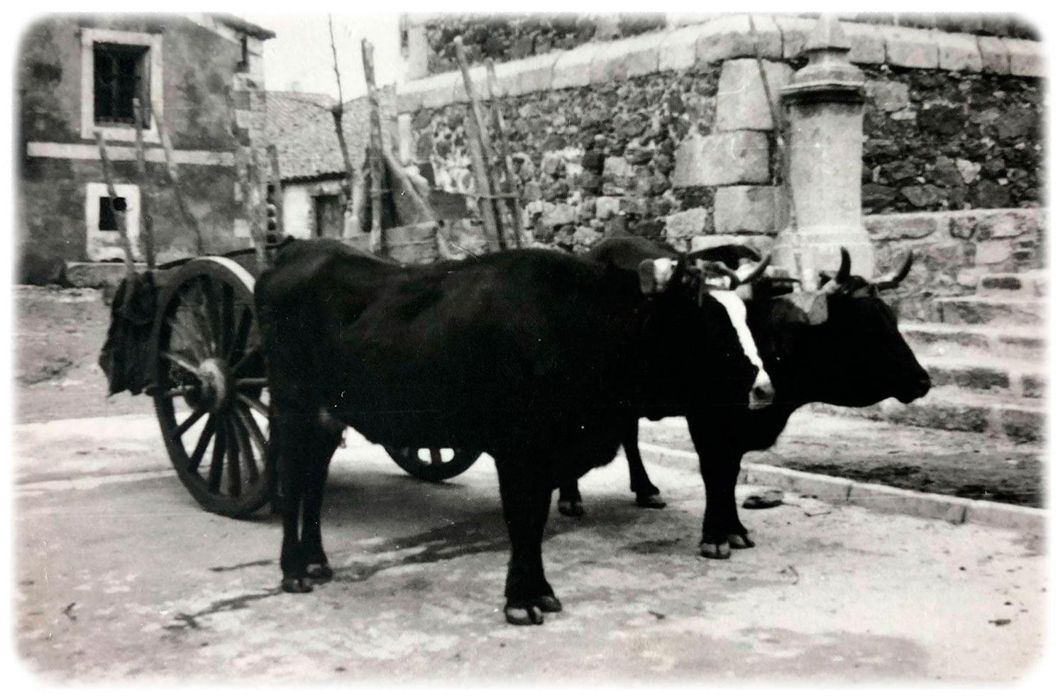 imagen antigua que representa la historia de agroturismo el capriolo