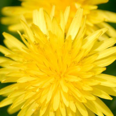 Flores-primavera-el-capriolo