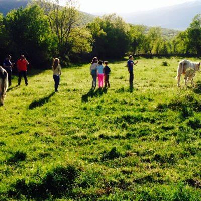 actividades rurales, con animales cerca de madrid