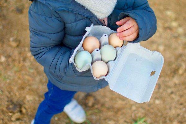 Huevos-Alojamientos-El-Capriolo