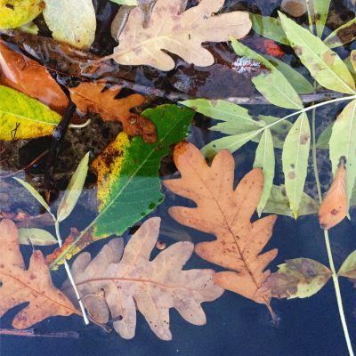 talleres por temporada el capriolo otoño