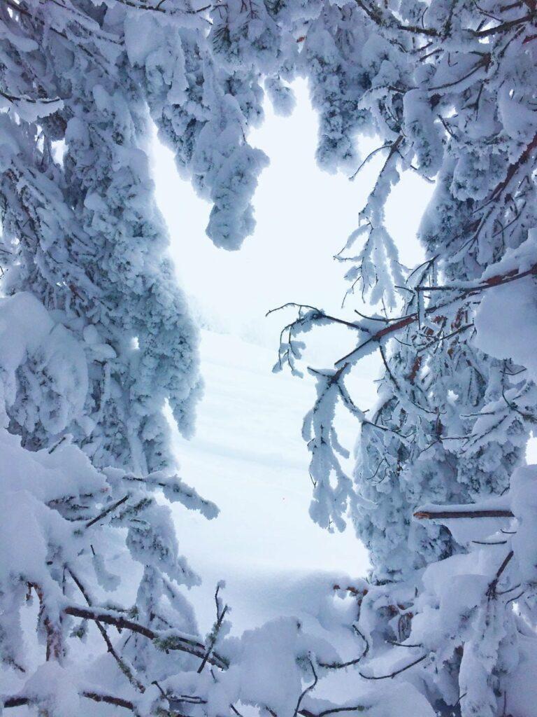 talleres de temporada invierno el capriolo nieve