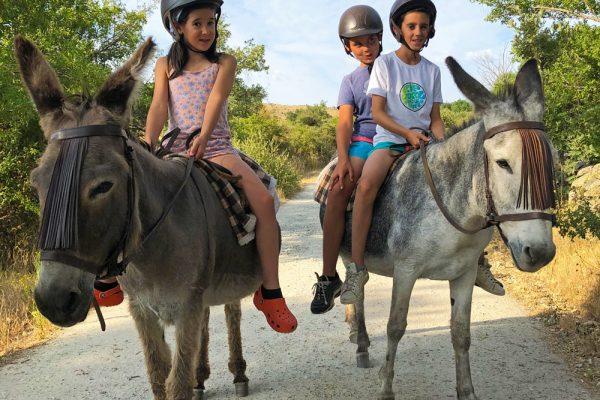escapada rural de puente con niños el capriolo burros casa rural con animales