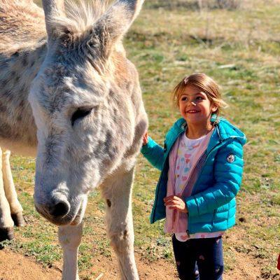 Paseo-en-burro-el-capriolo1