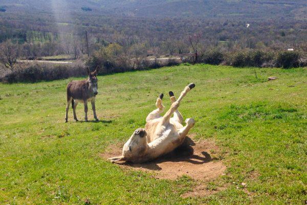 paseo en burro en Madrid