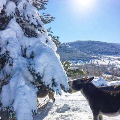 paseo en burro nieve el capriolo agroturismo