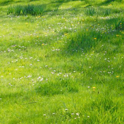 Primavera-el-capriolo