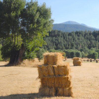 Valle-del-Lozoya-El-Capriolo1