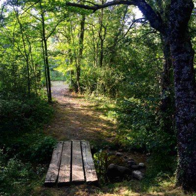 foto detalle sierra norte bosque