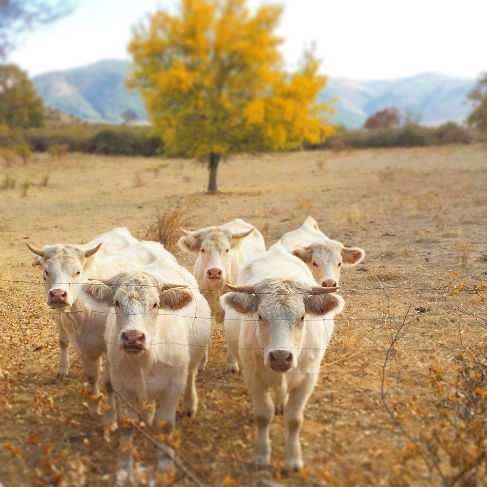 Agroturismo El Capriolo Ganadería de Vacas Turismo Rural Actividades