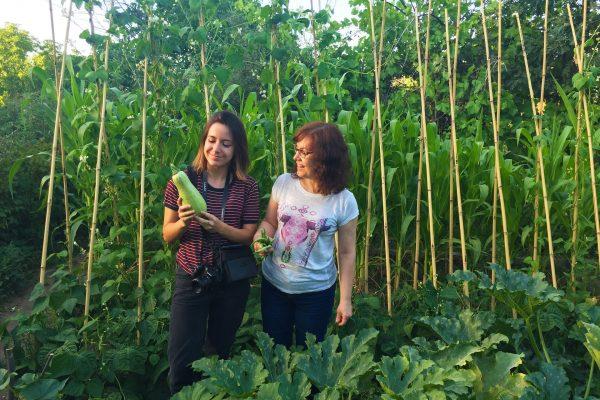 agricultura-ecologica-el-capriolo5