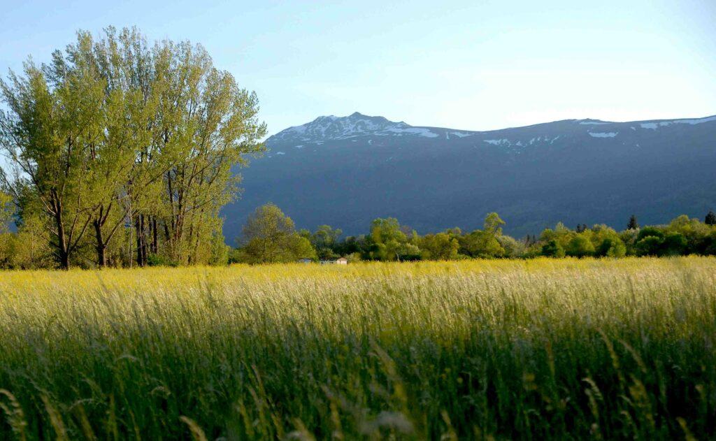 el capriolo en los medios paisaje de la sierra