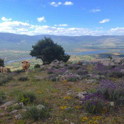 ruta-4x4-panoramica-3