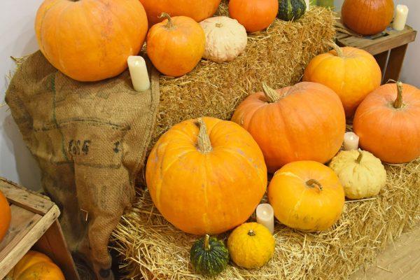 talleres para niños Halloween