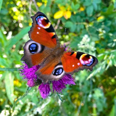 Senda-de-la-naturaleza-el-capriolo-mariposa
