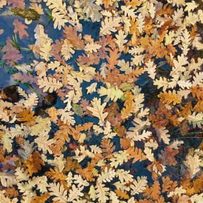 Talleres-de-otoño-el-capriolo
