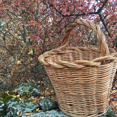 cesta-el-capriolo-mermeladas-setas
