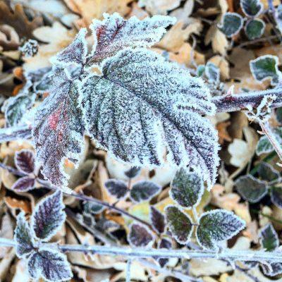 hoja-congelada-entorno-el-capriolo