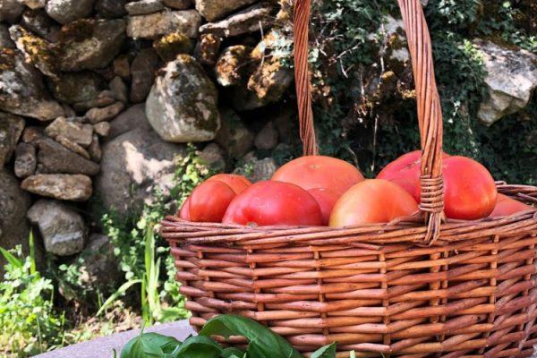tomates-huerto-el-capriolo