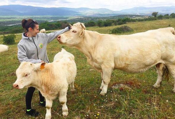 granjas en madrid ganadería agroturismo el capriolo
